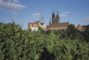 Weinberge Meissen
